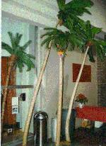 Palm Tree Rentals for Polynesian, Tropical, Luau, Hawaiian Parties and Events, Michigan, Ohio, Indiana